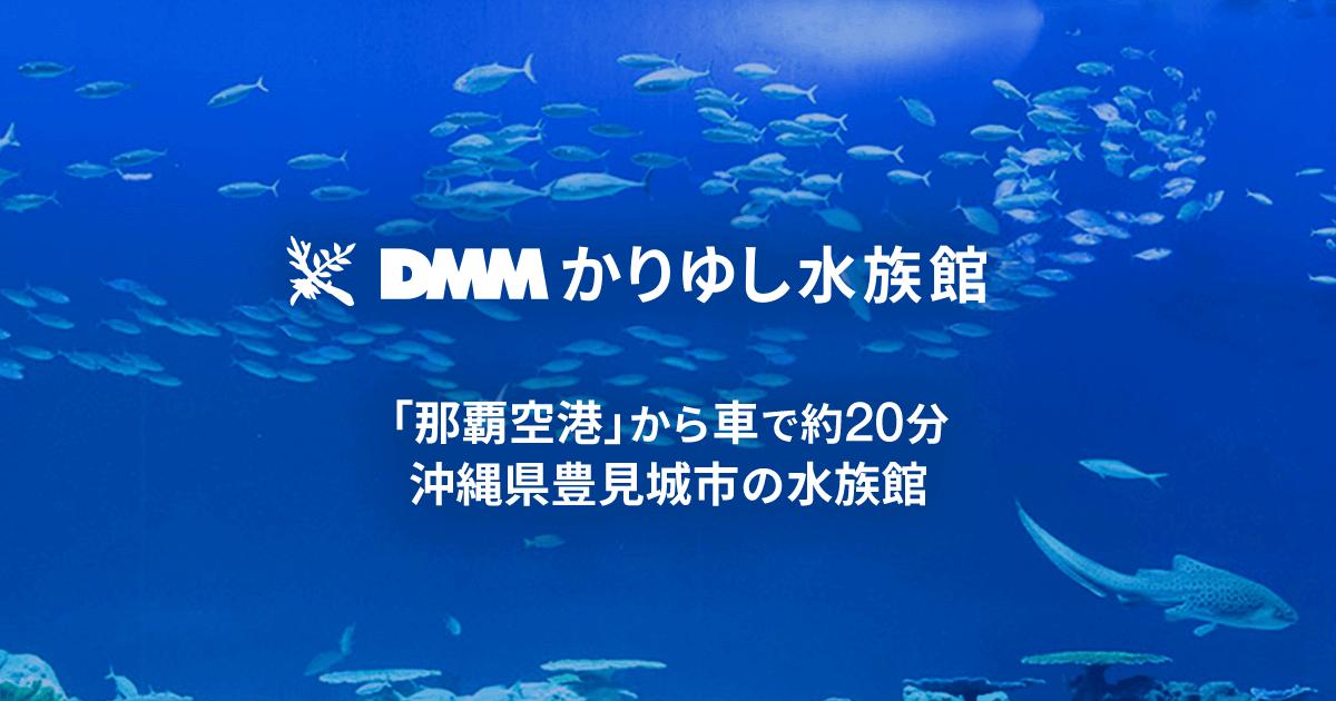 DMMかりゆし水族館|沖縄に新しいカタチのエンタテイメント水族館